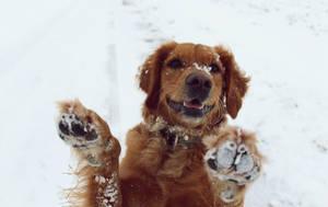 Frosty Paws by Bibblz