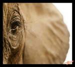 elephant eye by ezazamaz