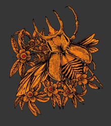 Kumbang New2 by rizalbak