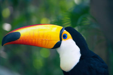 Toucan! by 425Pigeons