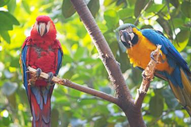 Parrots by 425Pigeons
