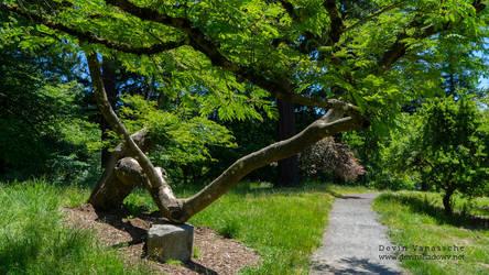 long side tree by DevinShadowV
