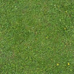 Seamless Green Grass Texture 01 by SimoonMurray