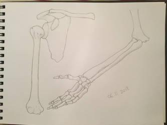 Bones by Gemmabee