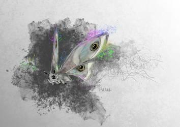 Saturniidae by Kajenx