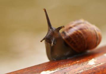 snail by TGGC