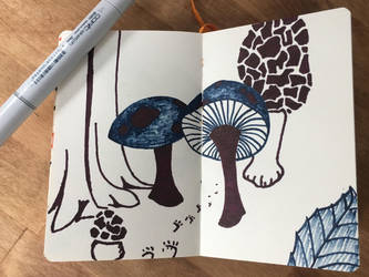 Some 'shrooms by beowolfMN