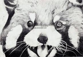 red panda. [2012] by CheyenneDrake