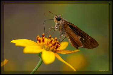 Nectar Snacking by GeodeLady