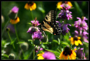 Springtime Visitors by GeodeLady