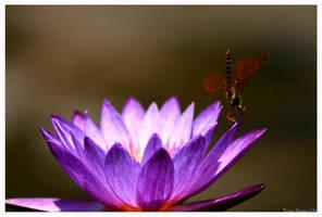 Lily Dancer by GeodeLady