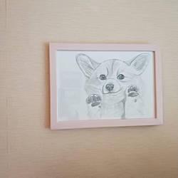 cute Corgi :3 by Raveshitsa