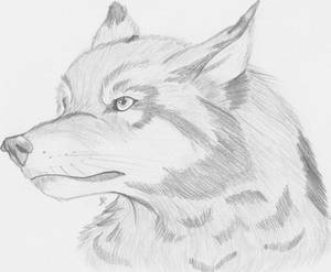Realistic Wolf by she0wolf