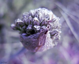 Gladiator bloom by VasiDgallery