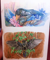 Watercolor try-outs by Maquenda