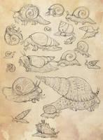Molluscat Snails by Maquenda