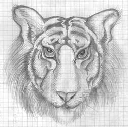 Tiger by Shevaol
