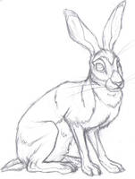 Hare by Kunzai