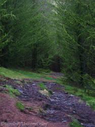 Enchanted path by tamsinrj