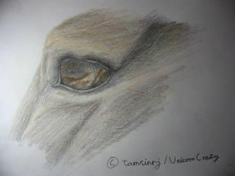 Horse Eye by tamsinrj