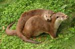 Otters by wiebkerost