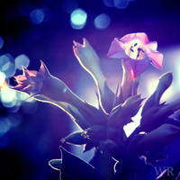Tobacco Flowers (alternate) by wiebkerost