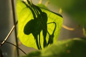 Leaf Shadow by wiebkerost