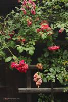Garden Shed by wiebkerost