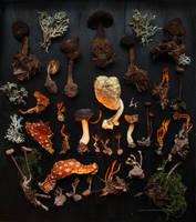 Fungi and Moss by wiebkerost