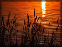 Lake Mattamuskeet 40D0033291 by Cristian-M