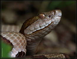 Copperhead 50D0003907 by Cristian-M