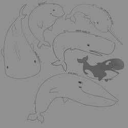 5 whales 1 shark by empluvie