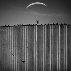Flights by Kleemass