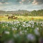 Arcadia by Kleemass