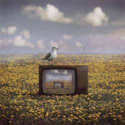 Tvision by Kleemass