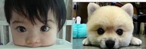 Puppy eyes by gummierobots