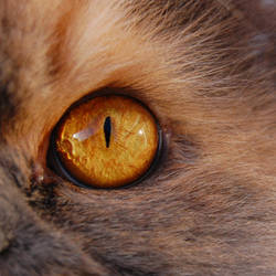 Eye of the Tiger by mnphoto