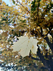 Autumn Leaf by ExposeTheBeauty