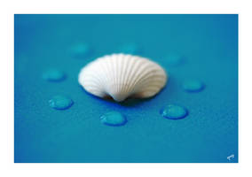 fresh shell .3 by spegi