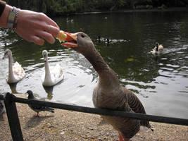Feeding time by Holowood