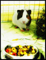 My Guinea Pig Sunny by oOBrushstrokeOo