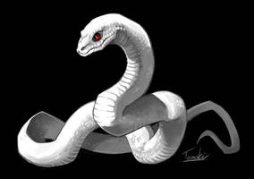 White Snake by tomoki17