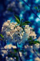 the blue freshness by DavidSchermann