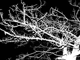 Wanderings II by LawnyJ