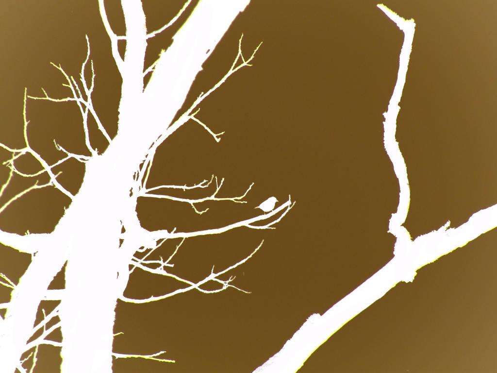 Brown Bird Wallpaper by LawnyJ