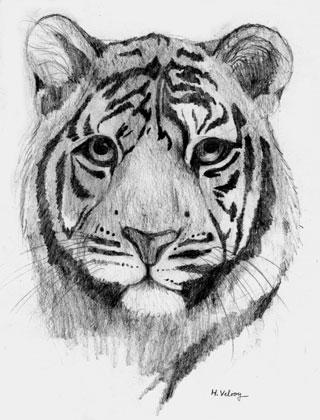 Tiger by HelgaVelroyen