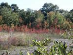 Autumn Wetlands by jerseybrat