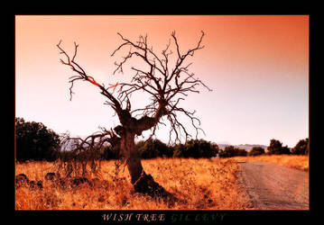 WISH TREE by Gil-Levy