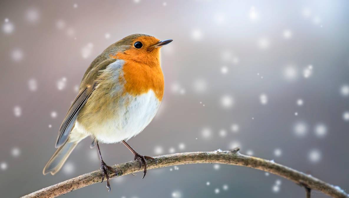 Merry Christmas by PaulaDarwinkel
