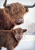 Protect like a mother by PaulaDarwinkel